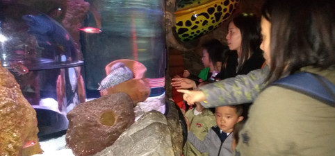 sealife centre.jpg