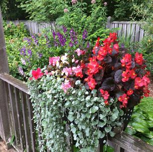 Eckerd Flower Boxes August
