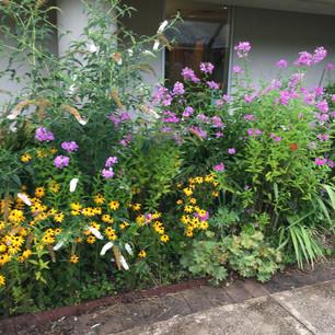 Eckerd Garden August