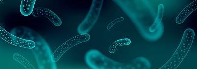 乳酸菌の効果.png