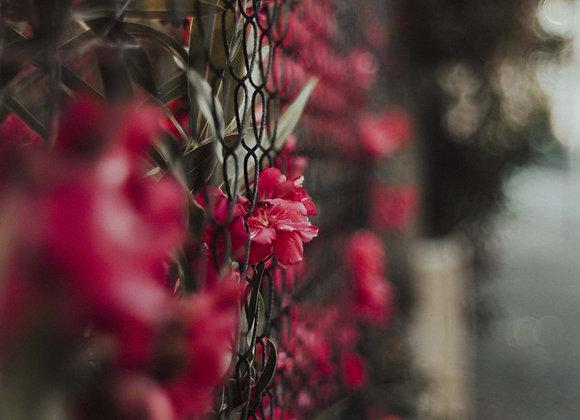 Fleurs libres
