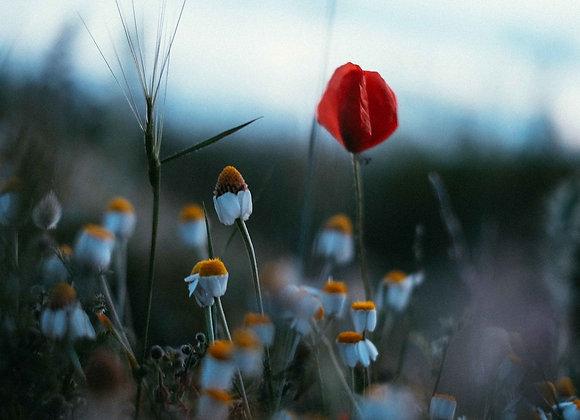 Fleurs endormies