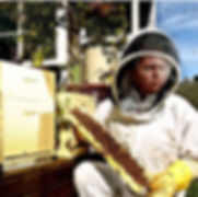 Urban Hum bring bees and their honey, to