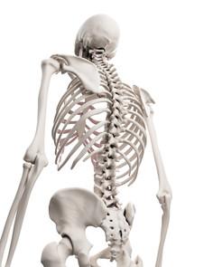 ∞受講生募集!10月開講解剖学コース