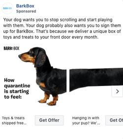 barkbox covid -9