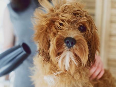 ¿Qué es el grooming para perros y cuales son sus beneficios?