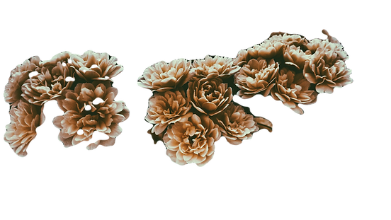 Sepia%20Flowers_edited.png