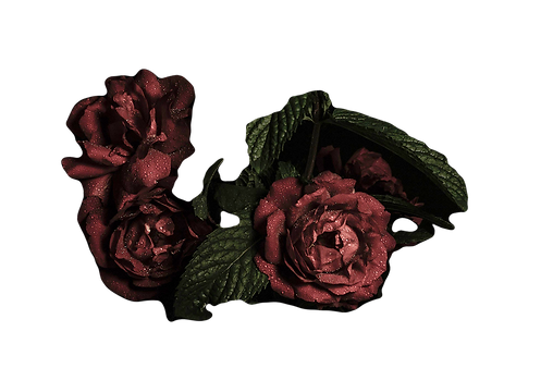 Flowers_edited_edited.png