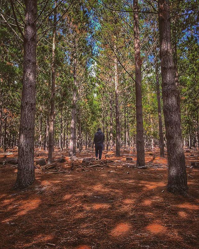 Still hunting for a location _-)_#WalkingInto Tall Tress _#FilmStudentsDoItBetter