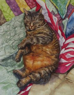 Cat Nip Nap