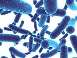Bifidobacterium.jpg