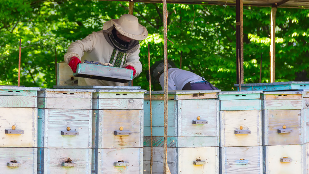 beekeepers_with_bee_hives_795550192_1200