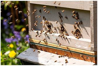 BeeSpace x_WEB.jpg