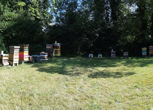 SMALL COMMERCIAL APIARY KIT - 10 Hives