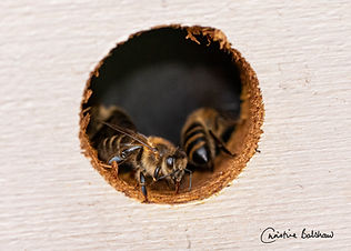Beespace.jpg