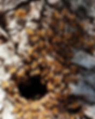 Hive Entrance 3.jpg