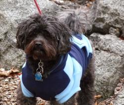 Teddy in a hoodie