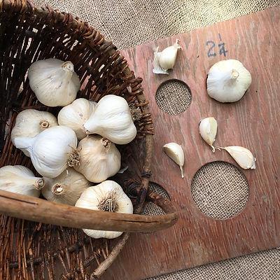 Naturally Grown Hard-Neck Garlic, Garlic Salts, Music Garlic, Music Seed Garlic - Stroudsburg, PA