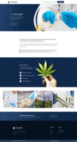 Web Designer in the USA | Wix Website Designer UK