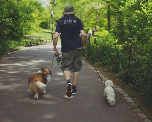 Dog Walking in Upper West Side New York