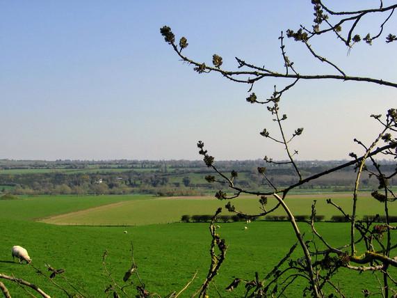 Scenery fields and sheep.jpg