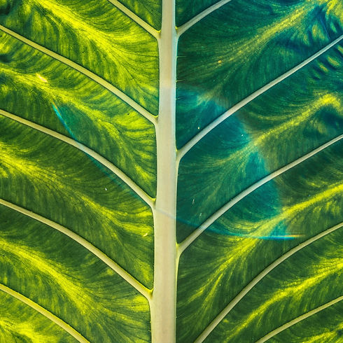 Tropical palm leaves summer time in sunny light_edited.jpg