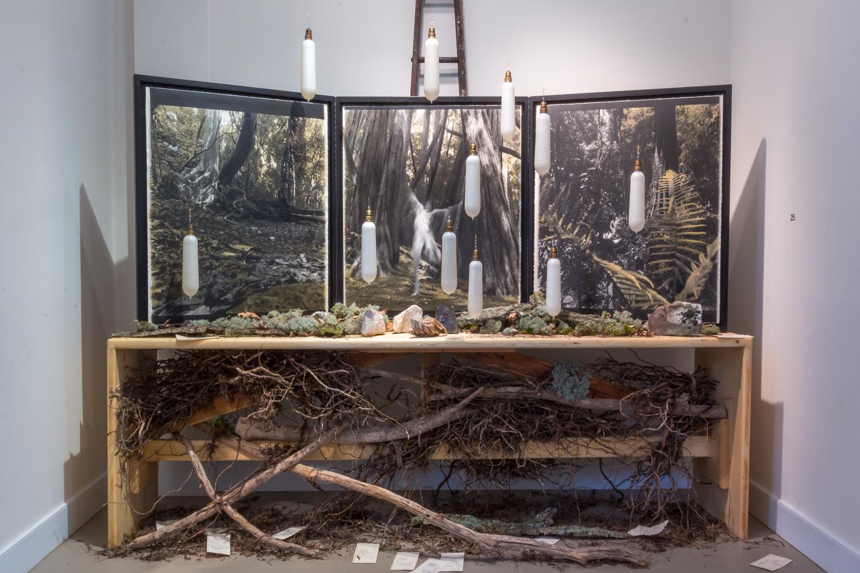 Forest Dwelling Triptych