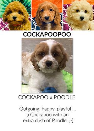 Cockapoopoo