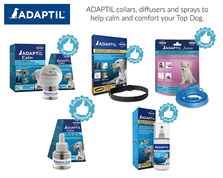 Adaptil at the top dog store