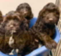 puupy sale at the top dog store in calgary