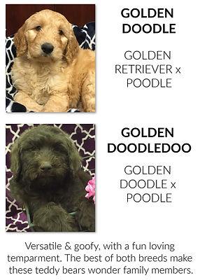 Goldendoodle & doo.jpg