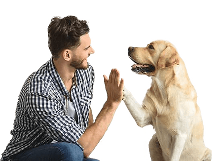 Dog breeders in Calgary | The Top Dog Store | Home