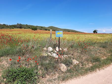 Ode aan de Camino Bajo Aragon