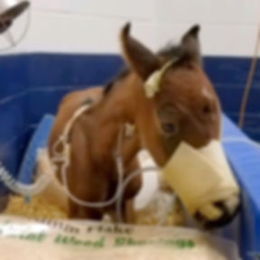 Foal in Foal Bed with Many Connections_e