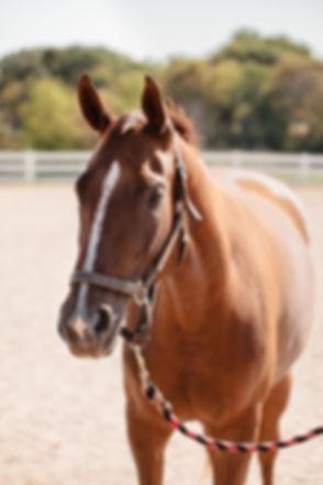 082_anoka-equine_2012.JPG