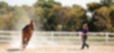 122_anoka-equine_2012.JPG
