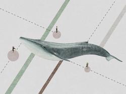 whalesinlogo