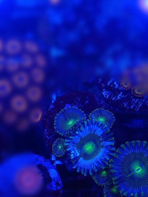 NO ID metalic blu
