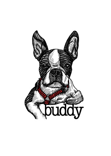Buddy_Illustration.jpg