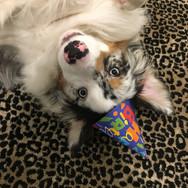 birthday-dog_t20_rR3eAB.jpg