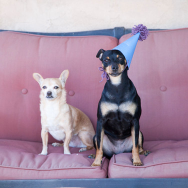 celebrating-a-dogs-birthday_t20_z2oXOr.j