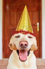 dog-birthday-party-PUAFYP6.jpg