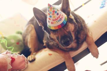 happy-birthday-rols_t20_lR1bdo.jpg