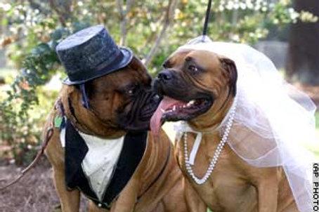 WEDDING PAWTY BOX