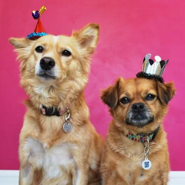 dog-party_t20_XzYLGV.jpg
