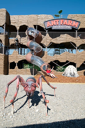 Ant Farm.jpg