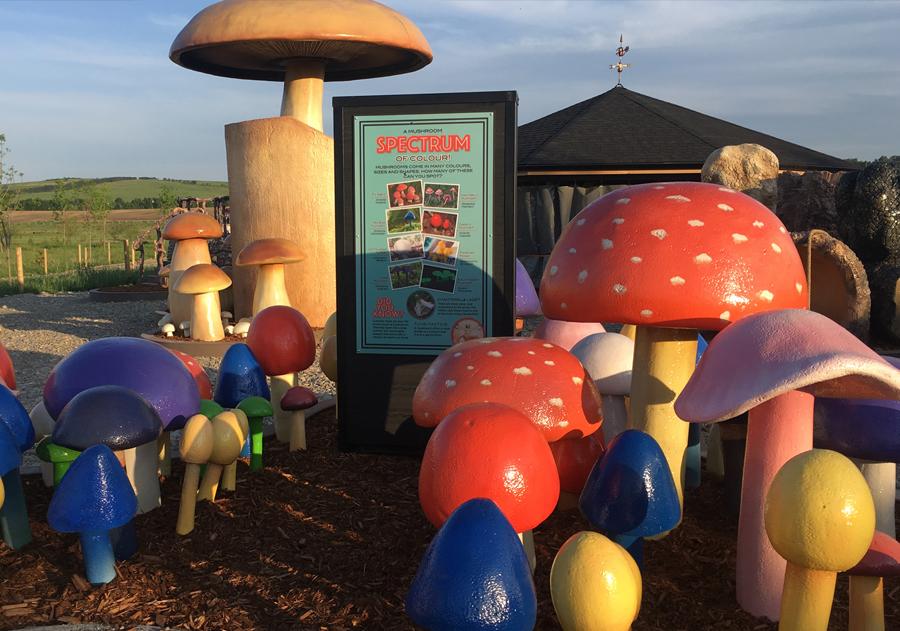 GR Mushroom Video  Image 7