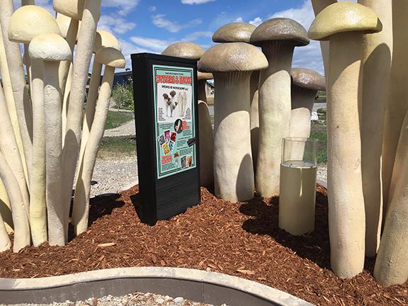 GR Mushroom for Web 2 LR