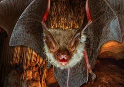 GR Bat Video Image 1
