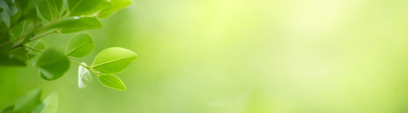 Matter Website Banner Slide Leaf.png